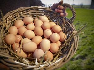 bioboerpieter_biologische_eieren